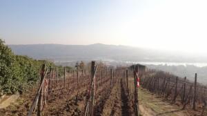 25 Cotes du Rhone .wijnvelden