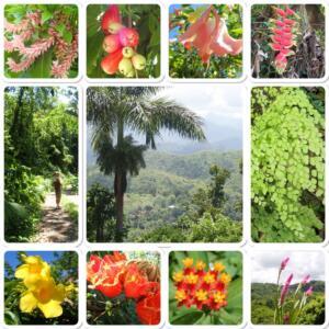 overal mooi flora en fauna