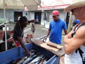 (20) Castries vis kopen