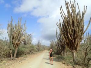44 Grote cactussen