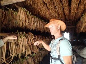 Omgeving Vinales. Hier hangt de tabak te drogen