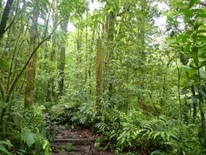 06 Regenwoud