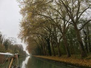 01 - Vele kilometers mooie bomenlanen langs het water