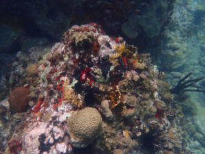 (46) Onderwater bij Chatham Bay